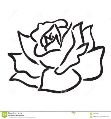 http://www.dreamstime.com/royalty-free-stock-photography-rose-image15264417